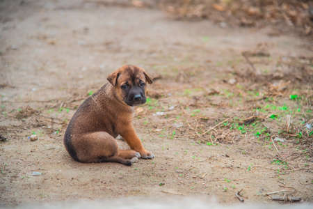 sitting on the ground: A portrait of a cute brown puppy sitting on the ground