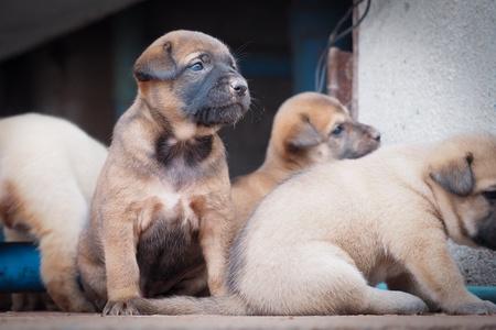 hope: puppies
