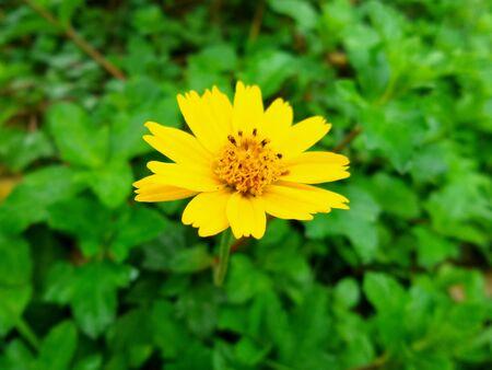 graden: A little yellow flower in the graden