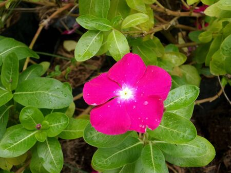 graden: A little pink flower in the graden Stock Photo
