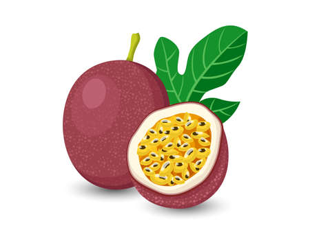 Vector Passion Fruit isolated on white background Stock Illustratie