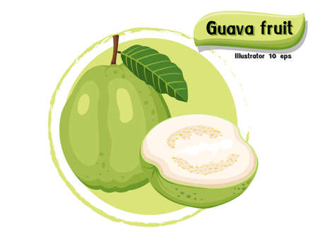 Vector Guava fruit isolated on color background,illustrator 10 eps 矢量图像