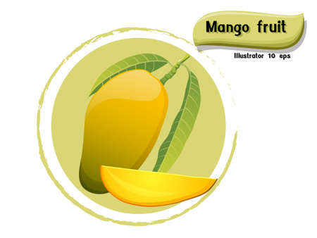 Vector Mango fruit isolated on color background,illustrator 10 eps Illustration