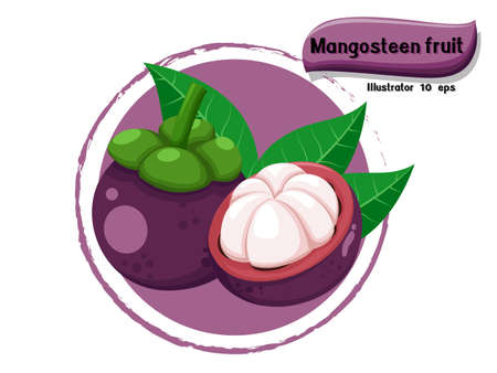 Vector Mangosteen fruit isolated on color background,illustrator 10 eps