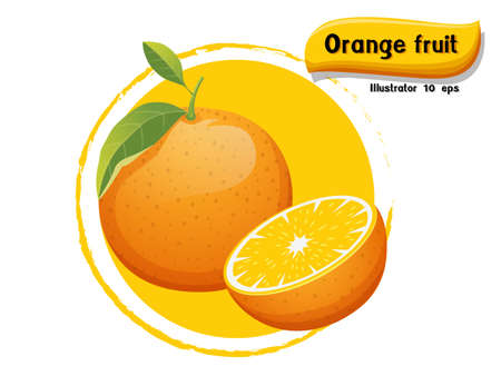 Vector Orange fruit isolated on color background,illustrator 10 eps