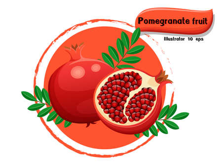 Vector Pomegranate fruit isolated on color background,illustrator 10 eps Illustration