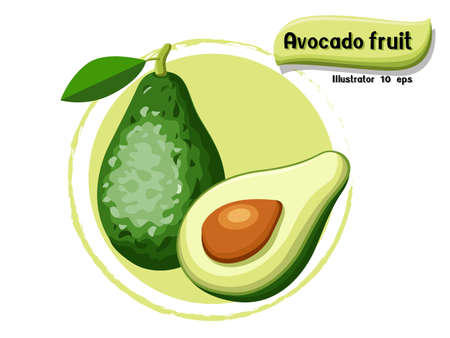 Vector Avocado fruit isolated on color background,illustrator 10 eps