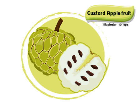 Vector Custard apple fruit isolated on color background,illustrator 10 eps