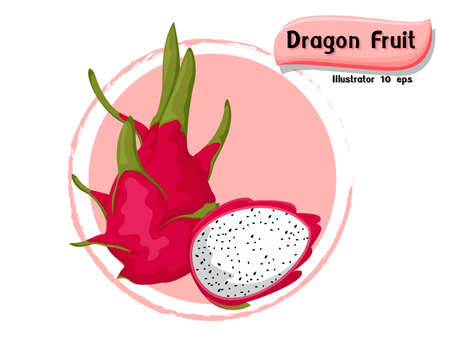 Vector Dragon fruit isolated on color background,illustrator 10 eps Illustration