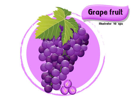 Vector Grape fruit isolated on color background,illustrator 10 eps
