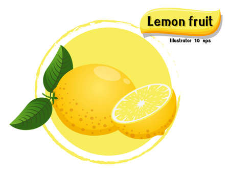 Vector Lemon fruit isolated on color background,illustrator 10 eps Illustration