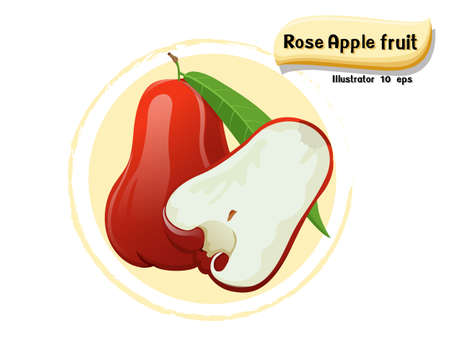 Vector Rose apple fruit isolated on color background,illustrator 10 eps
