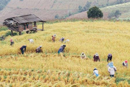 Farmers in  Field Reklamní fotografie - 82443815