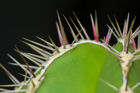Closeup green cactus with needles black background