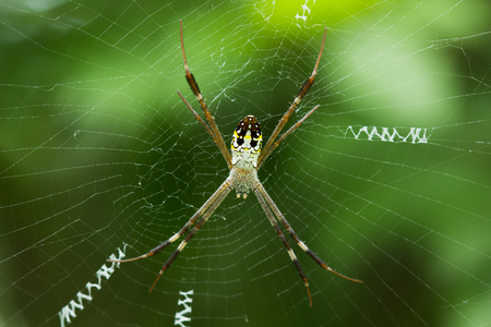 large spider in the web