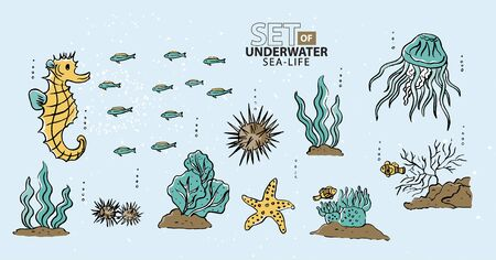 sealife: Under the sea, fish and sea-life Illustration