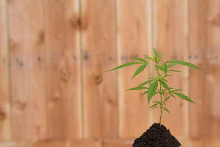 from marijuana