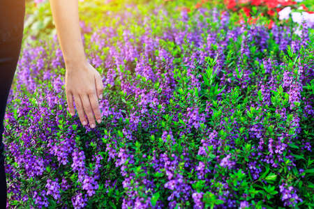 Hand of Young Woman Enjoying Nature Fields Flowers or with sunrise. Stock Photo