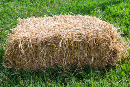 a pile of straw on field, straw bales after harvest.