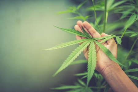marijuana plant in hand