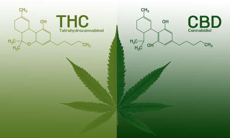 Image cannabis of the formula CBD-THC