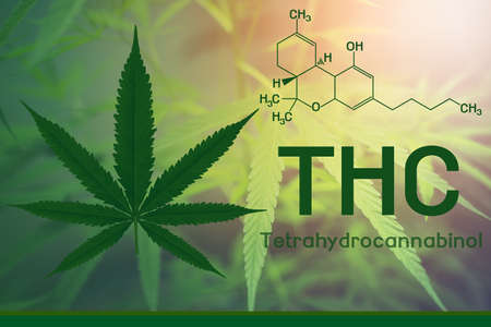 Image cannabis of the formula thc