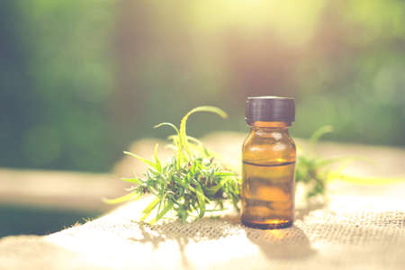 Cannabis oil, CBD oil cannabis extract, Medical cannabis concept. Stock Photo