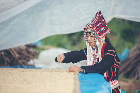 Akha women smiled and admired the coffee that was dried in the house, the hill tribe coffee products of northern Thailand. Imagens