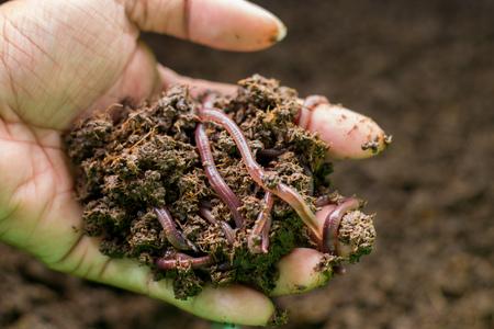 earth worms Foto de archivo