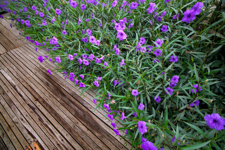 blue flower and wooden walkway
