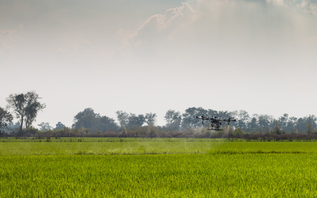 agriculture drone fly on sky and rice field