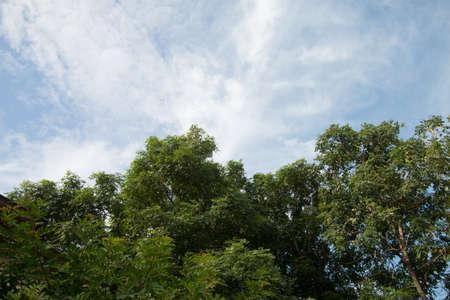 blue sky and tree background Foto de archivo