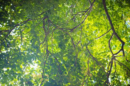 tree low angle view