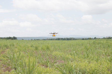 agriculture drone sprayer for smart farm fly on cane field and sky background