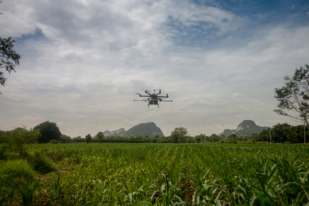 agriculture drone sprayer for smart farm fly on cane field Foto de archivo