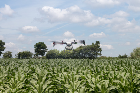 agriculture drone sprayer fly on corn field