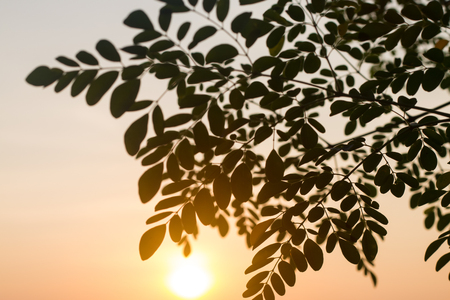 Autumn leaves and sunrise in morning