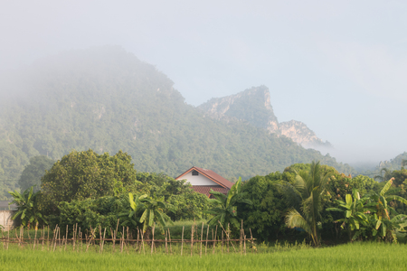 Beautiful landscape mountain and ricefield Foto de archivo