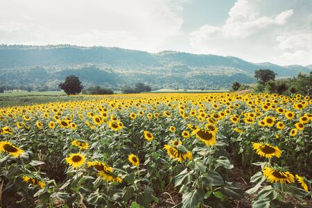 sunflower and mountain landscape