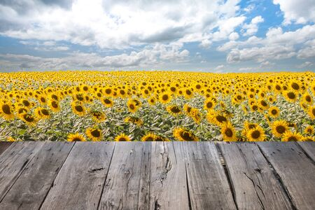empty wooden table sunflower field and sunrise background,landscape and wooden table background