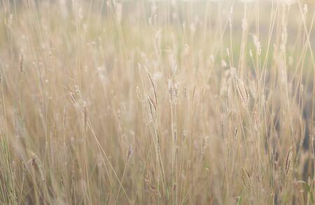 field of grass close-up background Foto de archivo
