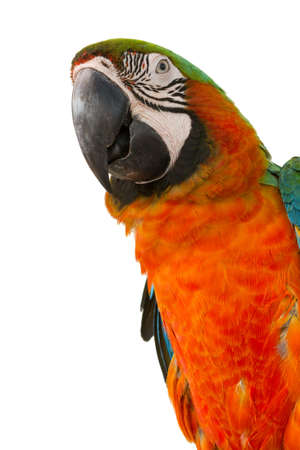 Macaw isolated on white background 스톡 콘텐츠