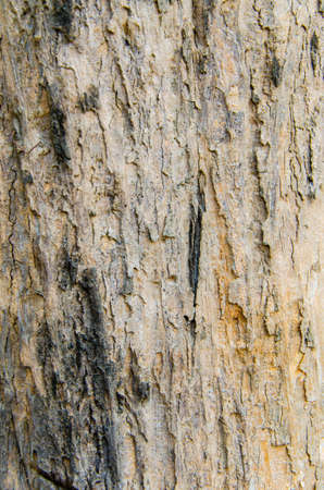 Bark of Tree Stock Photo - 17307575