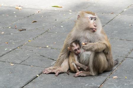 어머니 원숭이와 아기 원숭이 바닥에 앉아