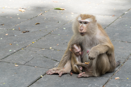 Mother monkey and baby monkey sitting on Flooring