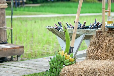 Bunch of bananas and dry straw, wine and green nature background