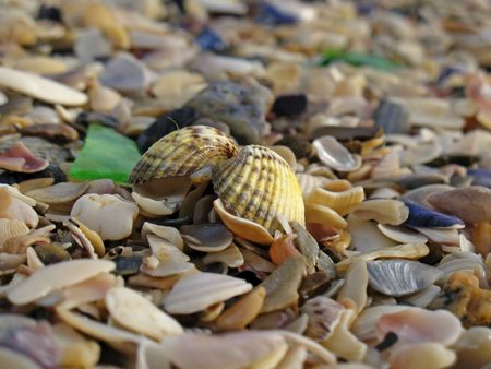 Lonely conch at a beach Stock Photo - 1365504
