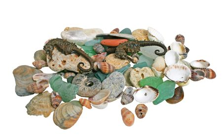 Sea shells on white background photo