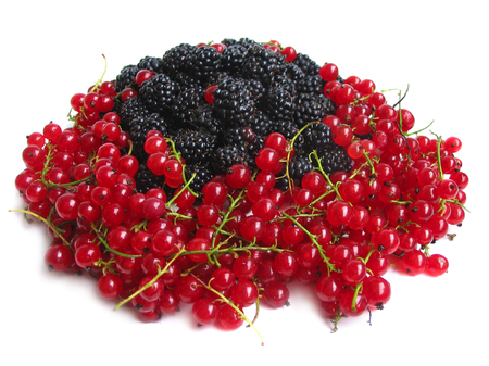 blackberry bush: Red currants and blackberries isolated on white background