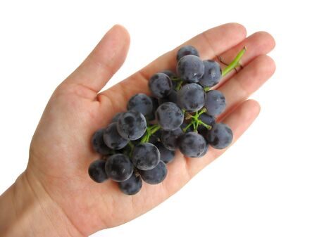 Womans hand holding a bunch of dark grapes on white background photo